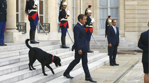 France's President Emmanuel Macron waits on the steps of the Elysee Palace, with his newly adopted dog, a labrador crossed griffon named Nemo. (AP)