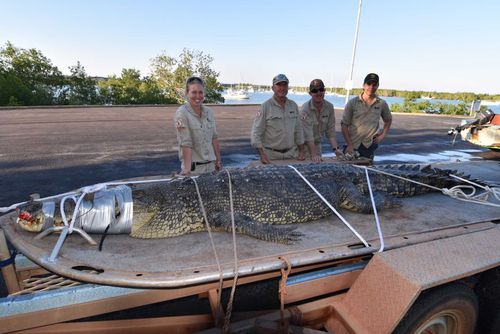 The crocodile, which weighed around 400kg, was removed from a trap in Sadgroves Creek by NT Parks and Wildlife specialists on Saturday afternoon. Picture: NT Parks and Wildlife