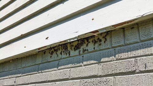 Bees infested George Montgomery's home.