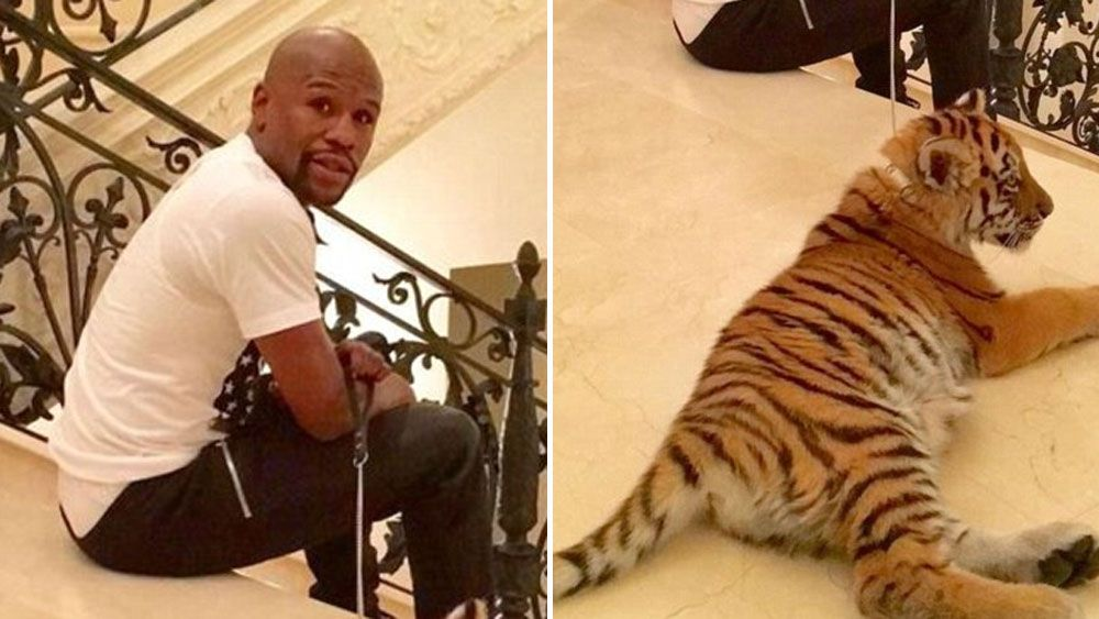 Floyd Mayweather with his pet tiger. (Supplied)