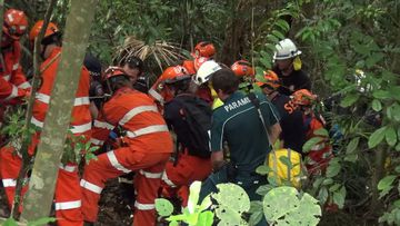 A woman has been crushed by a falling tree.