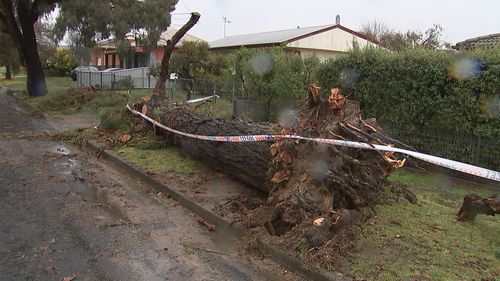 Trees were ripped from their roots and downed on suburban streets.