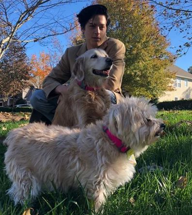Cole Sprouse, Lili Reinhart, dogs, Instagram Stories