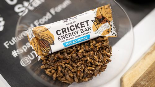 Energy bar made of crickets