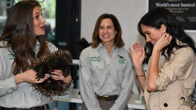 Prickly encounter for Meghan