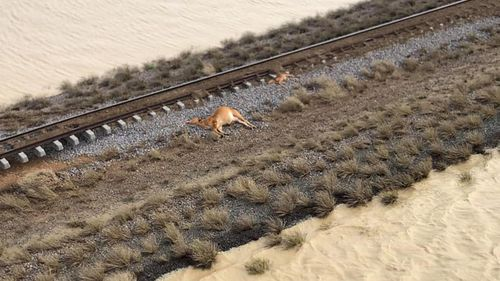 Cattle farmers around Julia Creek have been suffered massive losses in the disaster.