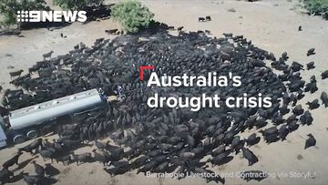 Australia's drought crisis