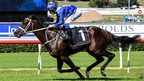 Winx is chasing a 25th straight win.