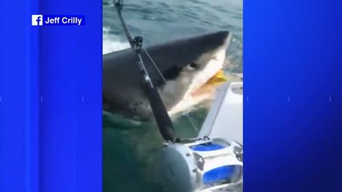 A group of fishermen got a fright when a great white shark stole the bait off the back of their boat in New Jersey.