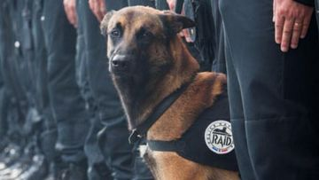 Diesel the police dog was killed during the siege at a Saint Denis apartment. (Supplied)