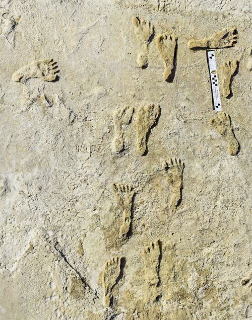 This undated photo made available by the National Park Service in September 2021 shows fossilised human fossilized footprints at the White Sands National Park in New Mexico. (NPS via AP)