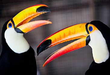Daily Quiz: Toucans are endemic to which continent?