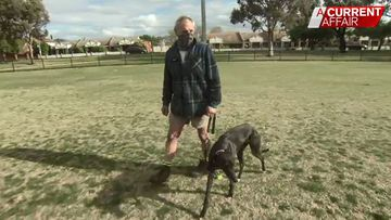 Dog owner told to keep rescue greyhound on tight leash