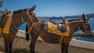 santorini donkey