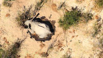 Dead African elephants