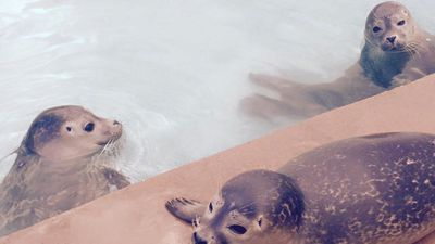(Natureland Seal Sanctuary)