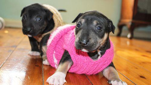 (Rita Smith/No Kill Pet Rescue)