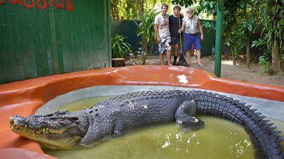 World record croc