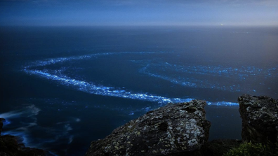 Jamen Percy saw a ring of  bioluminescence from Palm Beach Lighthouse.