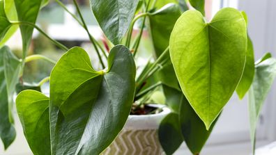 4 ways to revive a nearly dead houseplant