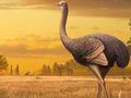 Ancient Europeans lived alongside a 500kg, 3.4m tall bird