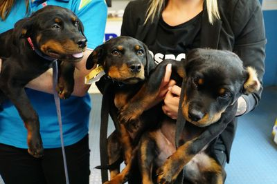 Who wouldn't want to take one of these cute puppies home? (Matt Coble)