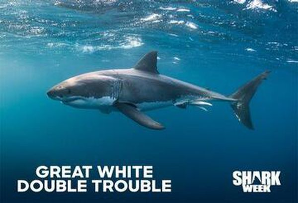 Great White Double Trouble