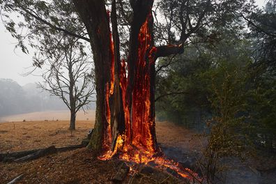 A tree burns from the inside out hours after the fire front had past on January 05, 2020 in Bundanoon, Australia.