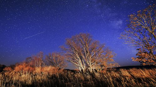 Meteors extend over the night sky during Orionid meteors. Photo by Yuri Smitiuk  TASS via Getty Images