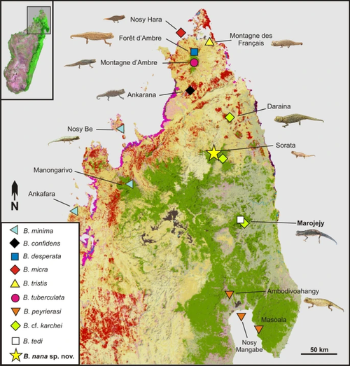 Map of northern Madagascar, showing the distribution of the species.
