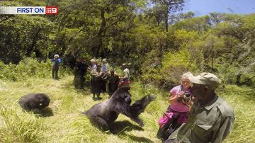 9RAW: Gorilla charges at Aussie woman, knocking her to the floor