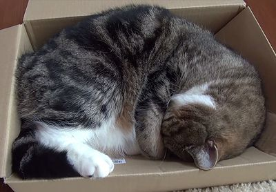 Maru sleeping