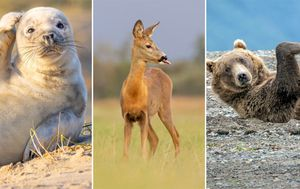Comedy Wildlife Photography Awards reveal top contenders for 2020