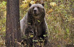 Hunter killed by grizzly bear in Alaska identified as Ohio man