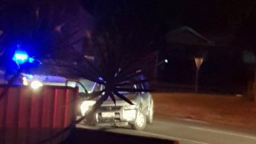 Girl, 12, among 5 kids arrested after 'frightening' police chase