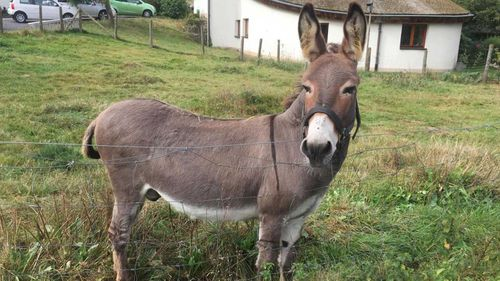 Owner must pay for donkey that bit car