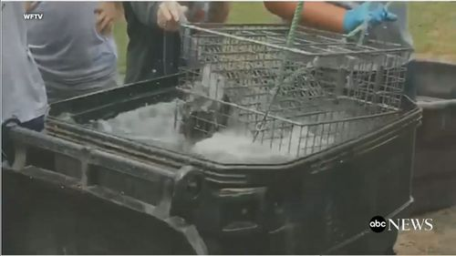 Video filmed by a student shows other students filling a bin with water and lowering a metal wire cage into it. (ABC America via WFTV)
