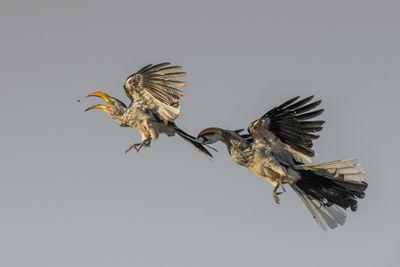 'First come, first served'. Category: Birds in Flight. Bronze award winner.