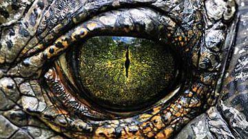 Indian crocodilia (Getty)
