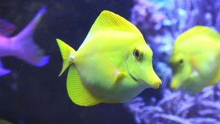 East Sister Island, Saxby Aquarium & More!