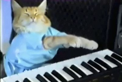 One of the internet's first feline stars, Keyboard Cat's musical stylings have been edited into hundreds more video clips since he first found fame in 2007.