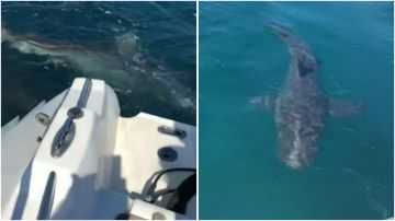 A Perth man has filmed the heart-stopping moment four sharks chased his inflatable boat off Rottnest Island.