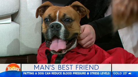 Lisa Wilkinson brings her paralysed puppy to TODAY