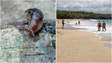Three visitors to Hawaii's Big Island have fallen ill with rat lungworm disease, bringing this year's total to five.