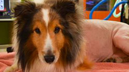 Vet student saves dog from death row by finding a tick