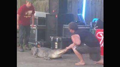 Gator bites trainer