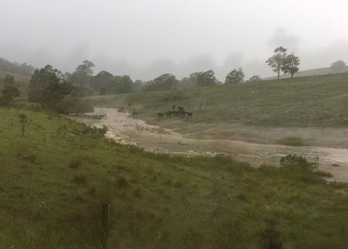 Farming areas near Dungog are flooding today after heavy rain. (NBNNEWS)