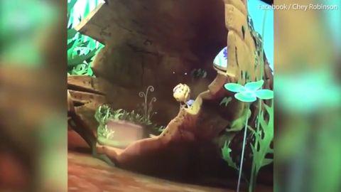 Maya the Bee, episode 35