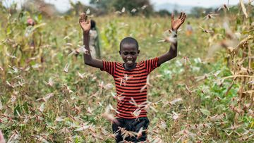 A farmer's son raises his arms as he is surrounded by desert locusts