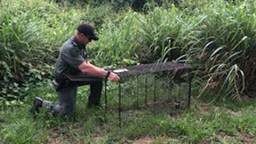 Sheriffs Department officers have placed traps around the area the man was killed in hopes of catching the dogs.